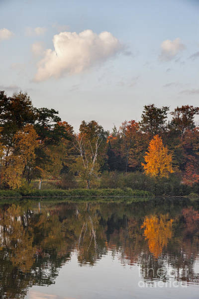 Maple Tree Reflection Art Print