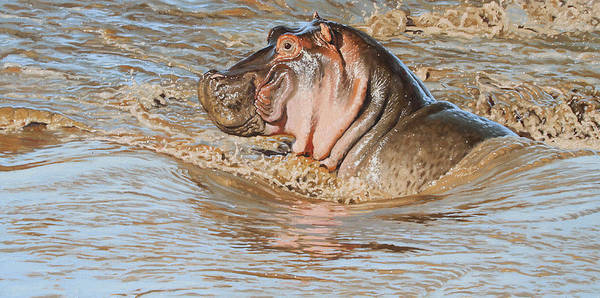Drawing Digital Art - Mara River Hippo by Aaron Blaise
