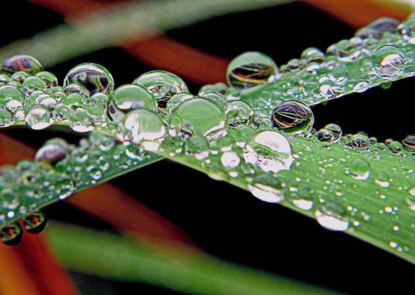 Photograph - Marble Drops by Suzy Piatt