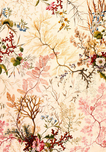 Backdrop Drawing - Marble End Paper  by William Kilburn