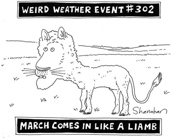 302 Wall Art - Drawing - March Comes In Like A Liamb by Danny Shanahan