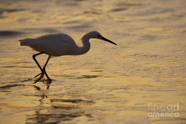 Waterfowl Wall Art - Photograph - March Of The Egret by Mike  Dawson