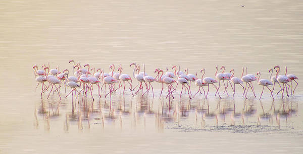 Wall Art - Photograph - Marching Pinks by Ahmed Thabet