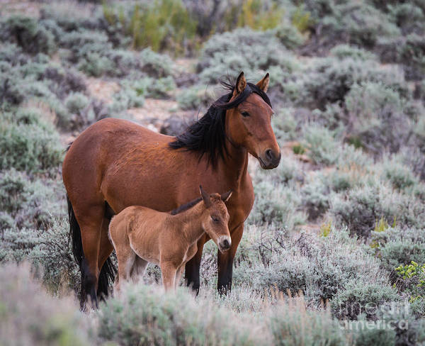 Mare And Foal Photograph - Mare And Filly by Mitch Shindelbower