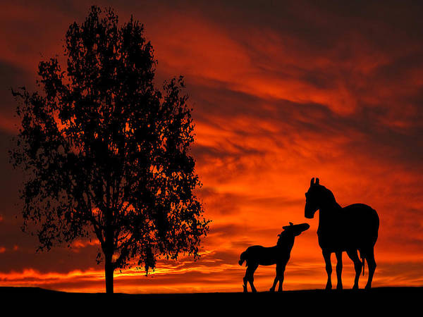Photograph - Mare And Foal Sunset Silhouette Series by David Dehner