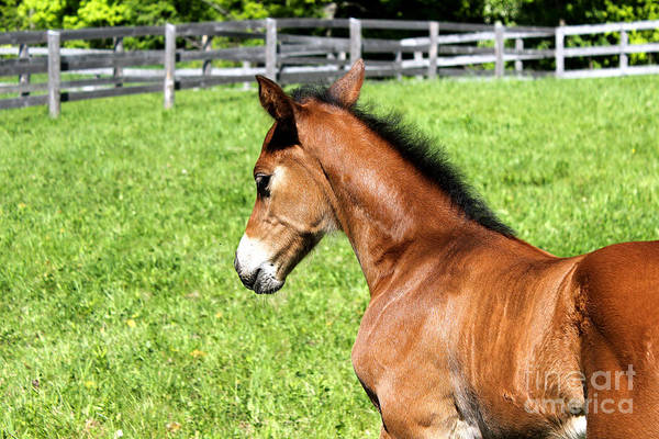 Photograph - Mare Foal28 by Janice Byer