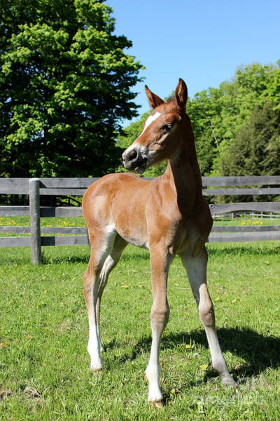 Photograph - Mare Foal30 by Janice Byer