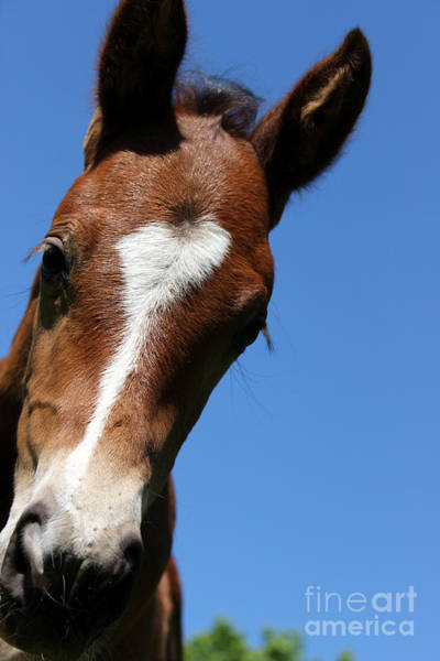 Photograph - Mare Foal31 by Janice Byer