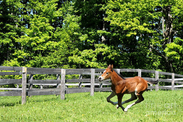 Photograph - Mare Foal39 by Janice Byer