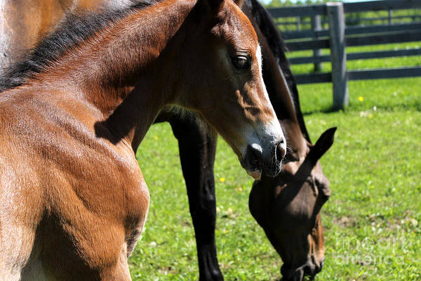 Photograph - Mare Foal40 by Janice Byer