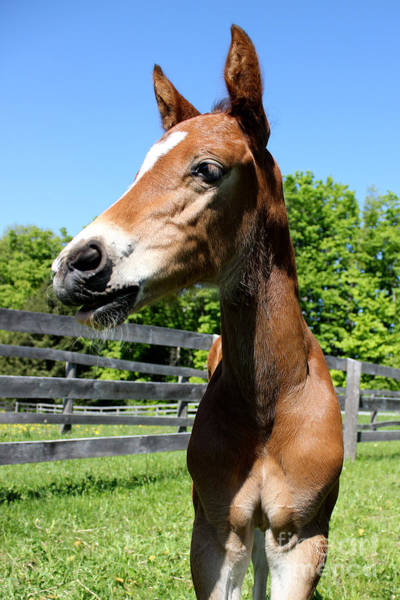 Photograph - Mare Foal46 by Janice Byer