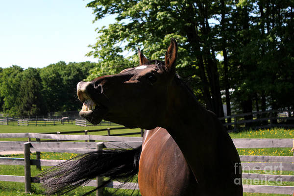 Photograph - Mare Foal51 by Janice Byer