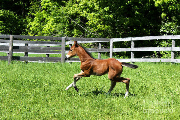Photograph - Mare Foal53 by Janice Byer