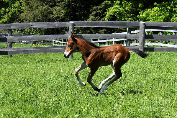 Photograph - Mare Foal54 by Janice Byer