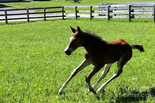 Photograph - Mare Foal56 by Janice Byer