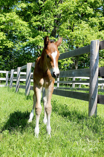 Photograph - Mare Foal57 by Janice Byer