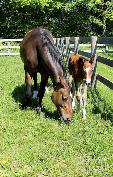 Photograph - Mare Foal59 by Janice Byer