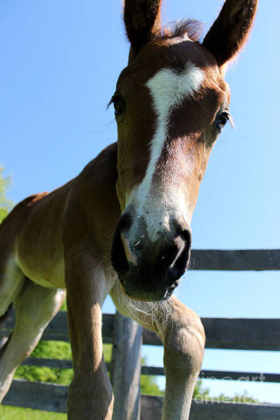 Photograph - Mare Foal60 by Janice Byer
