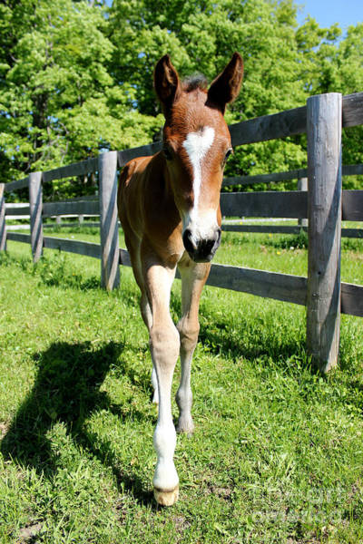 Photograph - Mare Foal63 by Janice Byer