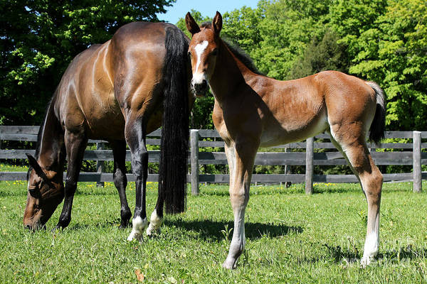 Photograph - Mare Foal64 by Janice Byer