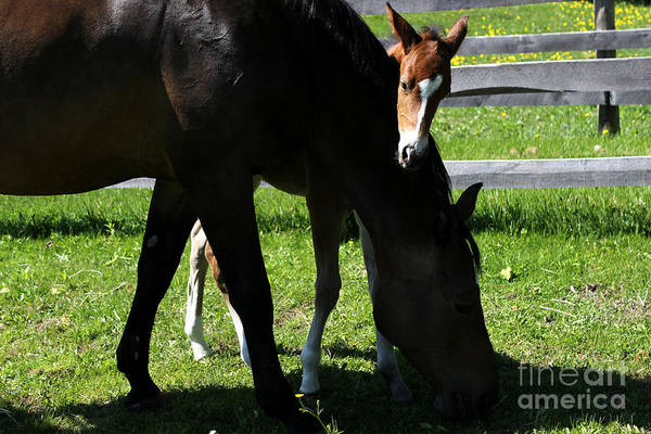 Photograph - Mare Foal66 by Janice Byer