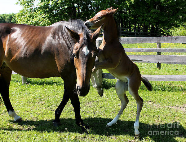 Photograph - Mare Foal67 by Janice Byer