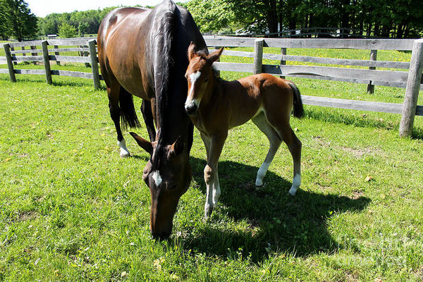 Photograph - Mare Foal68 by Janice Byer
