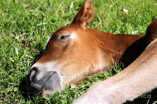 Photograph - Mare Foal71 by Janice Byer