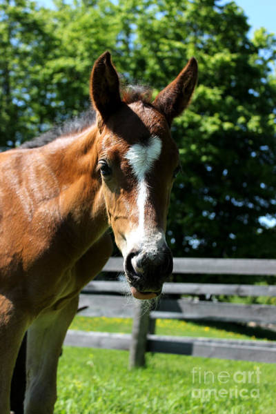 Photograph - Mare Foal74 by Janice Byer