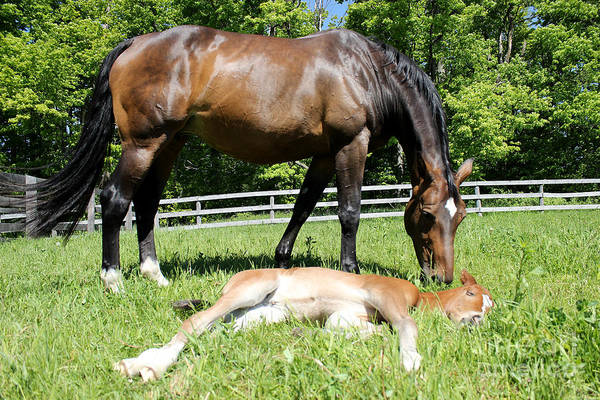 Photograph - Mare Foal80 by Janice Byer