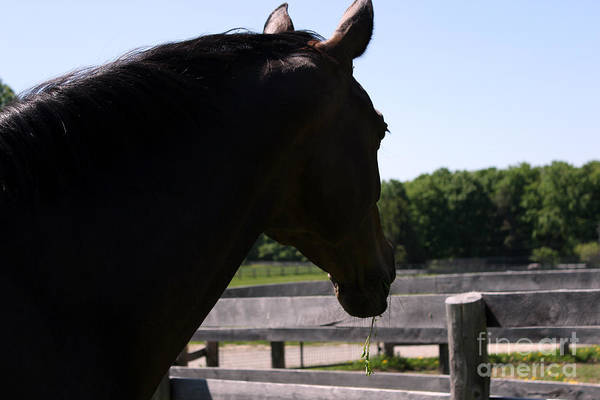 Photograph - Mare Foal87 by Janice Byer