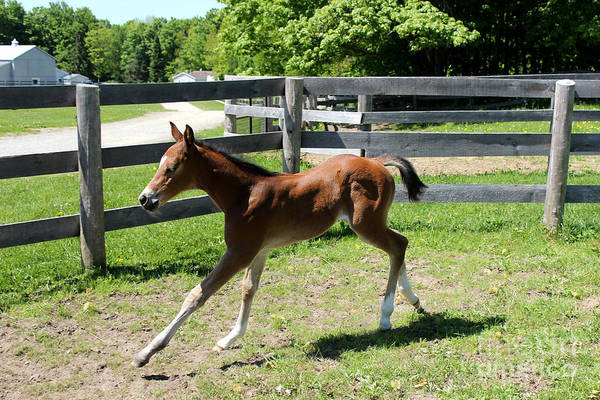 Photograph - Mare Foal88 by Janice Byer