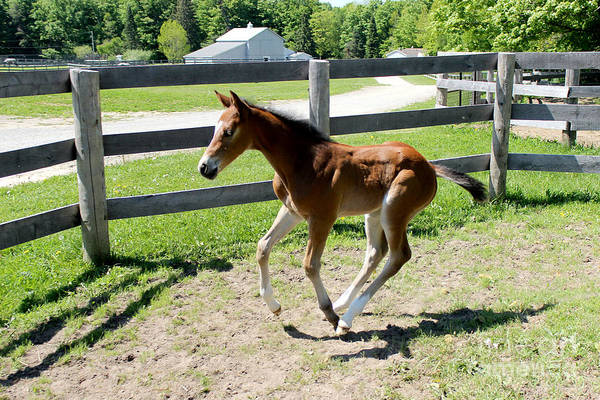 Photograph - Mare Foal90 by Janice Byer
