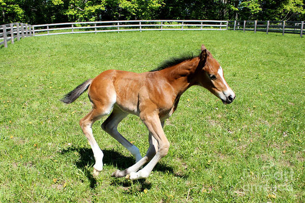 Photograph - Mare Foal93 by Janice Byer