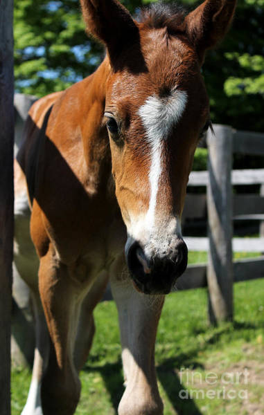 Photograph - Mare Foal95 by Janice Byer