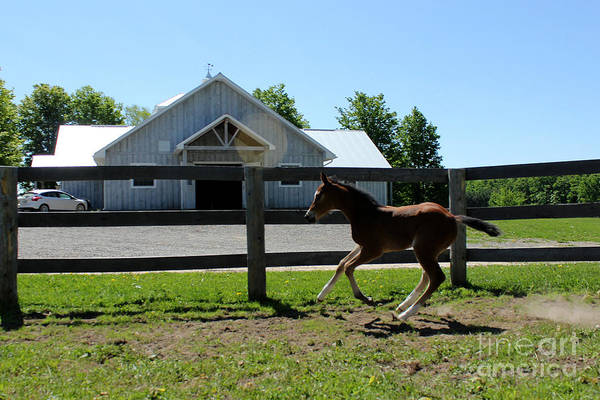 Photograph - Mare Foal98 by Janice Byer