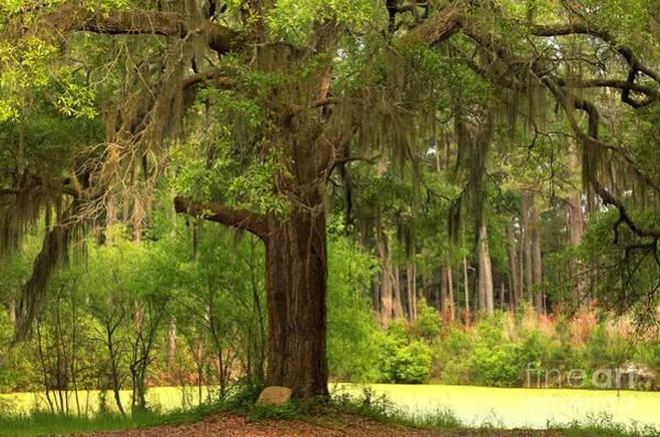 Photograph - Margaret Morrison Meyer Tree by Adam Jewell