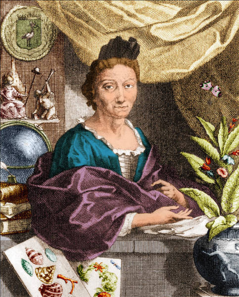 Photograph - Maria Merian, German Naturalist by Science Source