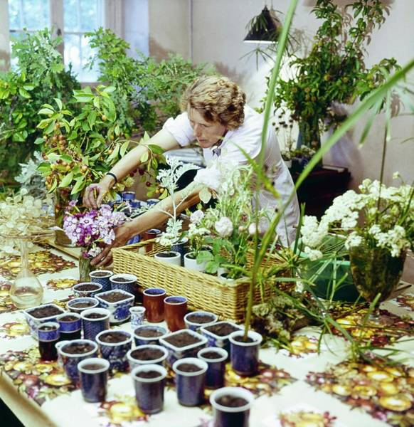 Gardener Photograph - Marie Gyselinck Flower Arranging At Mouton by Horst P. Horst