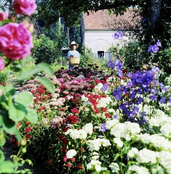 Ornamental Plant Photograph - Marie-helene Serreulles In Her Garden by Horst P. Horst