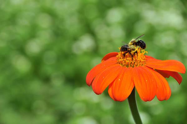 Wall Art - Photograph - Marigold And Honey Bees by Bonnie Sue Rauch