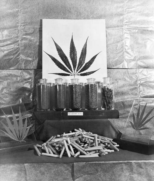 Wall Art - Photograph - Marijuana, C1945 by Granger