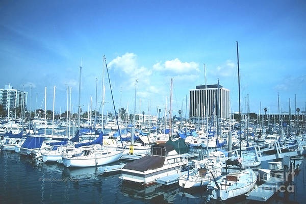 Photograph - Marina Full Of Boats by Richard J Thompson