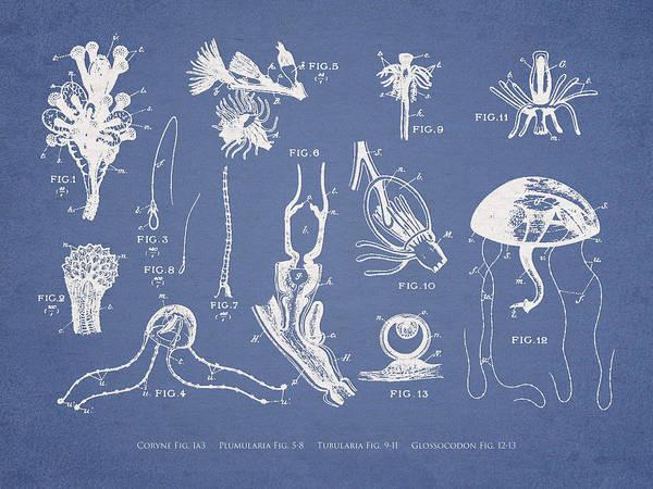 Wall Art - Digital Art - Marine Organisms Hydromedusae by Aged Pixel