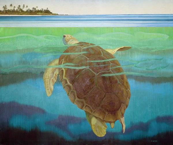 Wall Art - Photograph - Marine Turtle by Natural History Museum, London/science Photo Library
