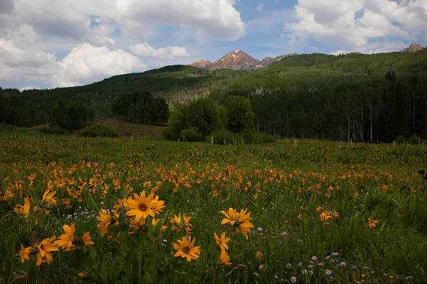 Photograph - Maroon Bells In Bloom by Susan Rovira