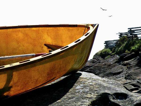 Photograph - Marooned by Micki Findlay