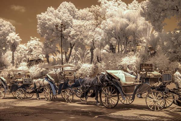 Marrakech Street Life - Horses Art Print