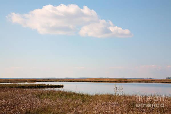 Photograph - Marsh At Blackwater National Wildlife Refuge Near Cambridge Maryland by William Kuta