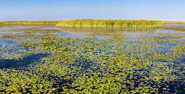 Lake Okeechobee Wall Art - Photograph - Marsh At Edge Of Lake Okeechobee by Panoramic Images